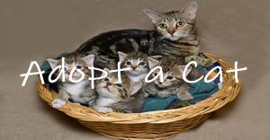 cat menu with text-2