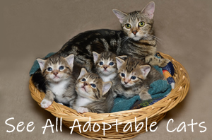 homepage-cats